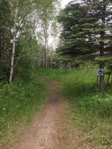 The Ironwood Trail