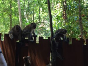 monkeys on Railay Beach